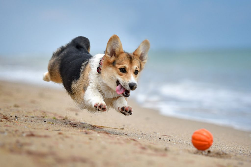 Corgi | From the blog of Nicholas C. Rossis, author of science fiction, the Pearseus epic fantasy series and children's books