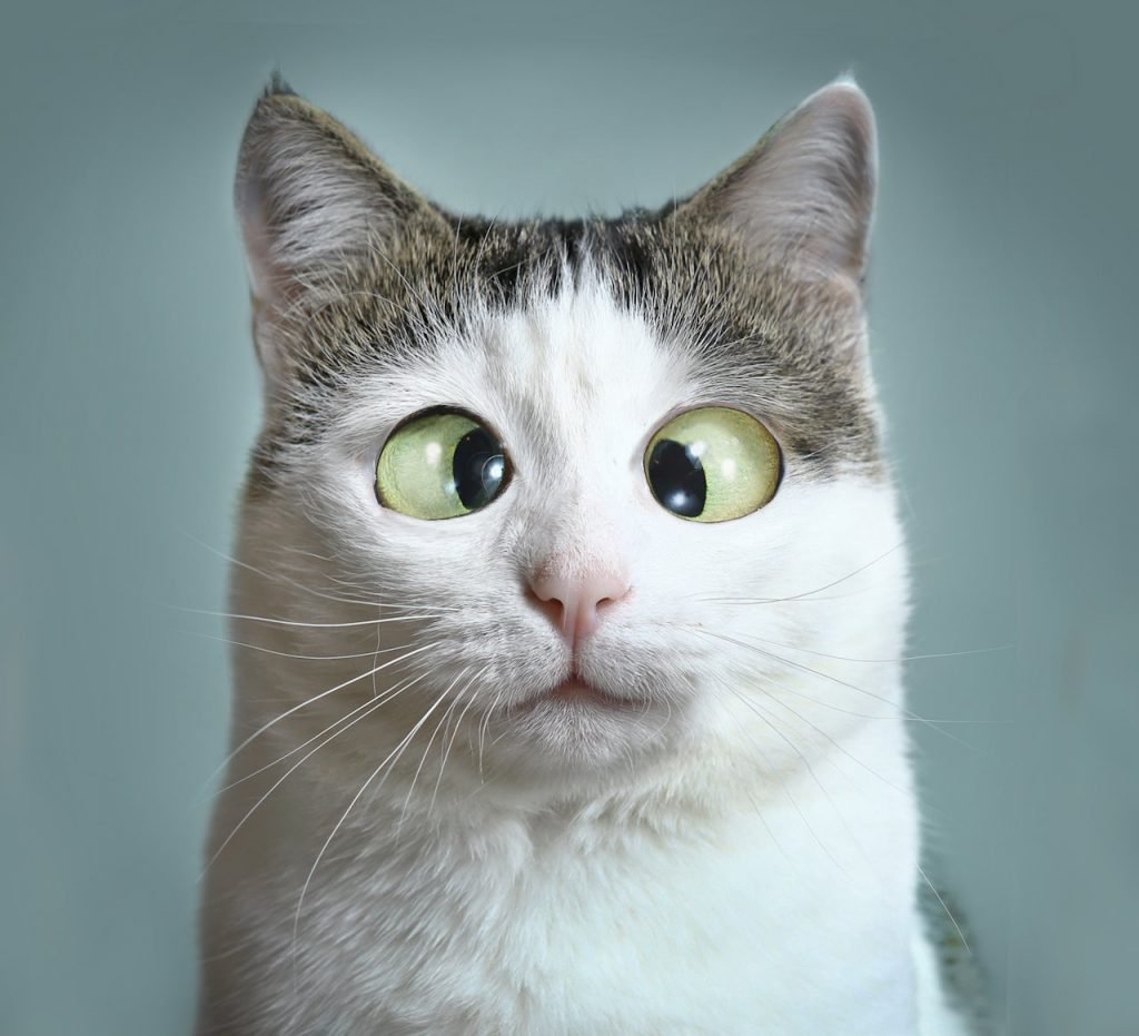 Cross-eyed cat - similes and metaphors | From the blog of Nicholas C. Rossis, author of science fiction, the Pearseus epic fantasy series and children's book